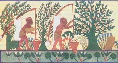 Полив деревьев.  Египет