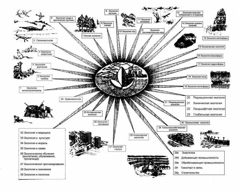 составных частей экосистем