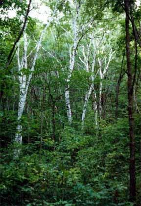 Экологические тропы как один