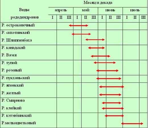 Календарь цветения рододендронов