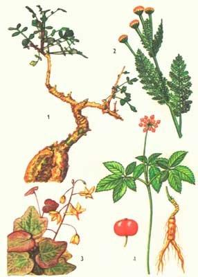 Редкие растения северной америки