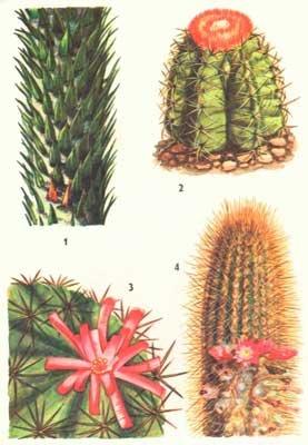 Растения южной америки список названий